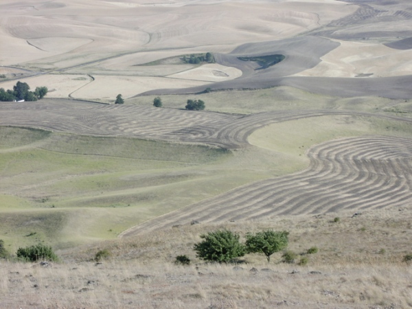 View from Steptoe Butte 2