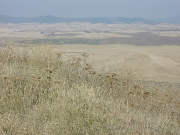 View from Steptoe Butte 3