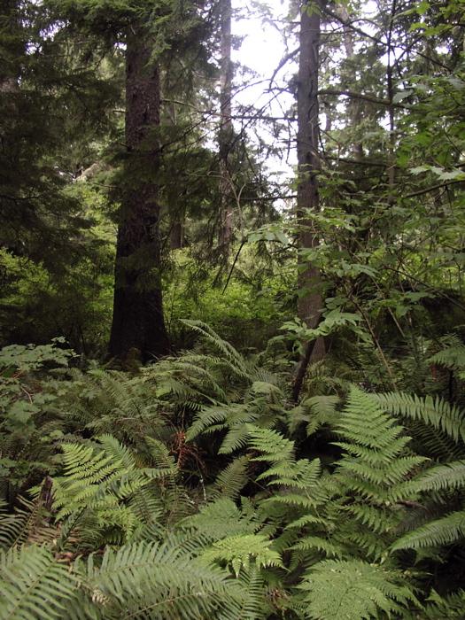 Ferny woods
