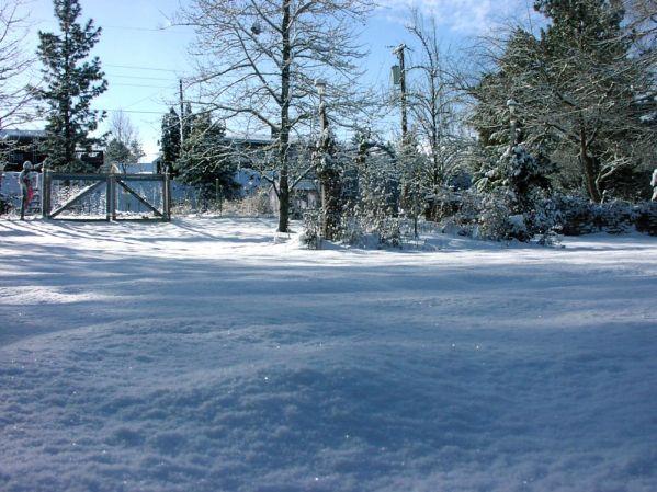 Sparkling snow