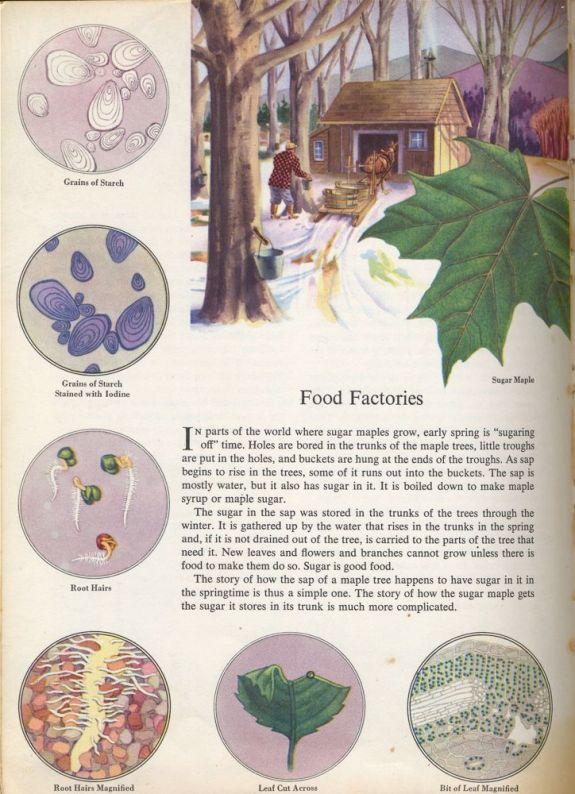 Food factories