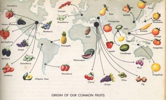 Origins of fruit