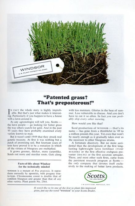 Patented Grass