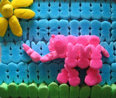 Peep elephant