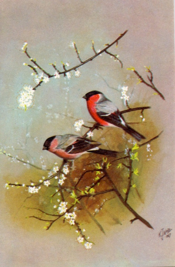 oriental-birds318