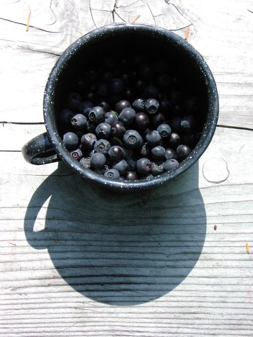 Shannon Creek berries