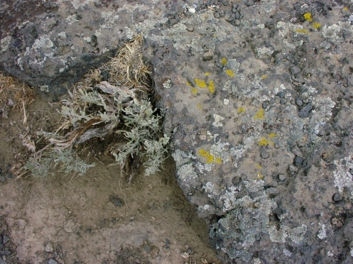 Desert lichen and sage.JPG