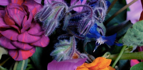 June flowers 4