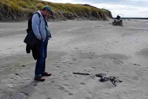 Benson Beach dead pelican
