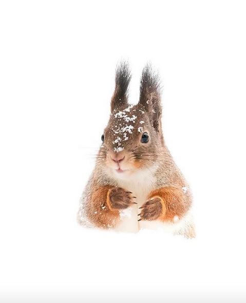 Pensive squirrel