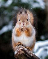 Squirrel energy