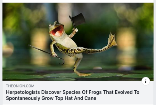 Frog discovery