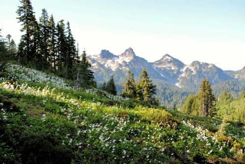 Avalanch lilies and Tatoosh